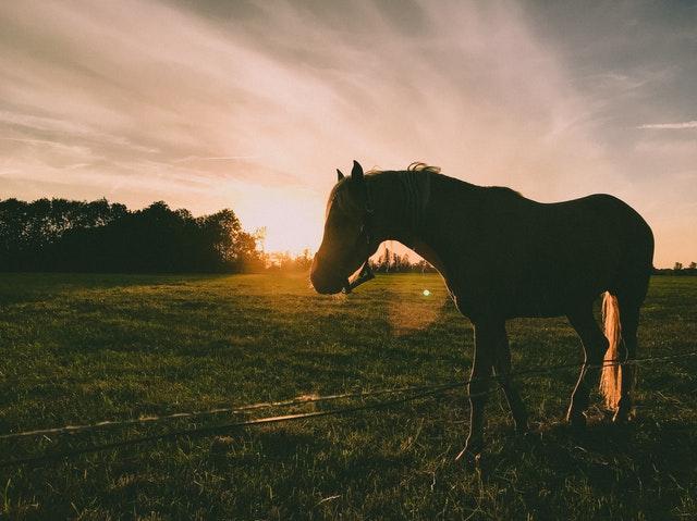 ló szinonimái